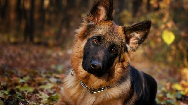 Jak zjistit, jestli je váš pes génius