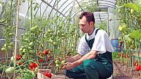 Rajčata potřebují dostatek čerstvého vzduchu