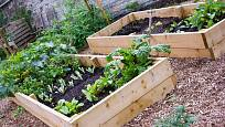 Na vyvýšených zeleninových záhonech se půda prohřeje rychleji