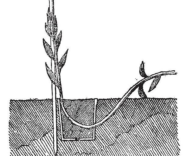 princip hřížení