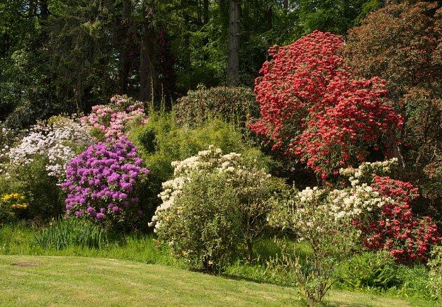 Keře dávají zahradě strukturu a mohou i krásně kvést