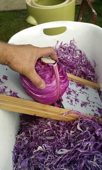 příprava kysaného zelí