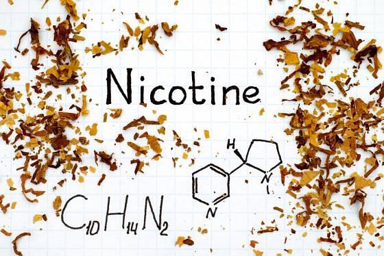 V tabákových listech je nikotin vázán na kyselinu jablečnou a citrónovou.