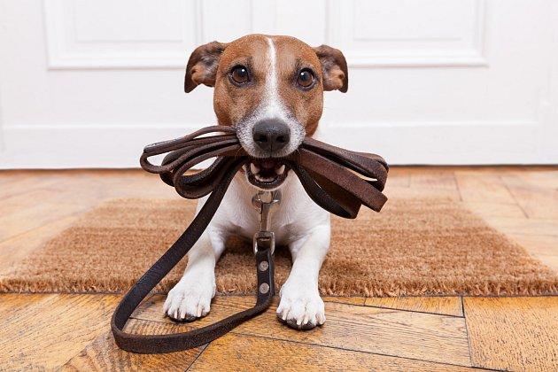 """Pokud psovi řeknete """"jdeme ven"""" a držíte u toho vodítko, zvíře se dovtípí, že ho čeká procházka a má radost."""
