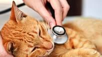 Především v období línání mohou mít kočky velký problém s polykáním velkého množství chlupů.