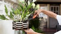 S hnojením orchidejí bychom to neměli přehánět.