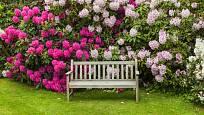 Posezení pod kvetoucími rododendrony.