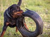 Kousnutí některých psů, pokud k němu dojde, se nedá zapomenout.