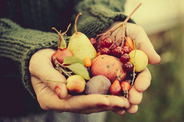 Ovoce sklidíme dříve, než přijdou první mrazy