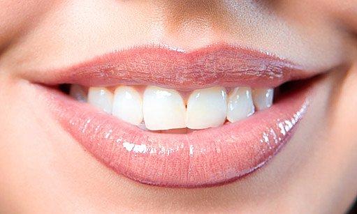 trávicí trakt začíná ústní dutinou