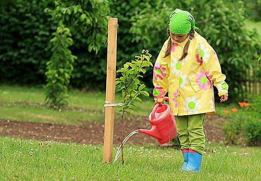 mladé stromky potřebují oporu
