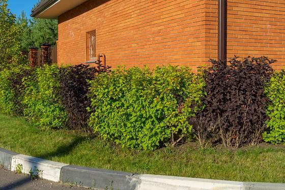 Živý plot - střídání barev.