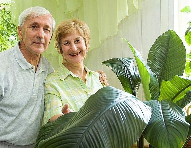 pěstujeme banánovník