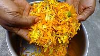 Mast připravujeme z květních úborů nebo jen okvětních plátků měsíčku