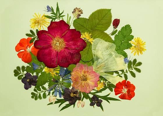 Oshibana - vytváření obrazů z vylisovaných rostlin.