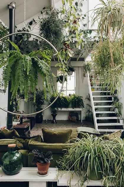 Obývací pokoj s bohatou zelení.