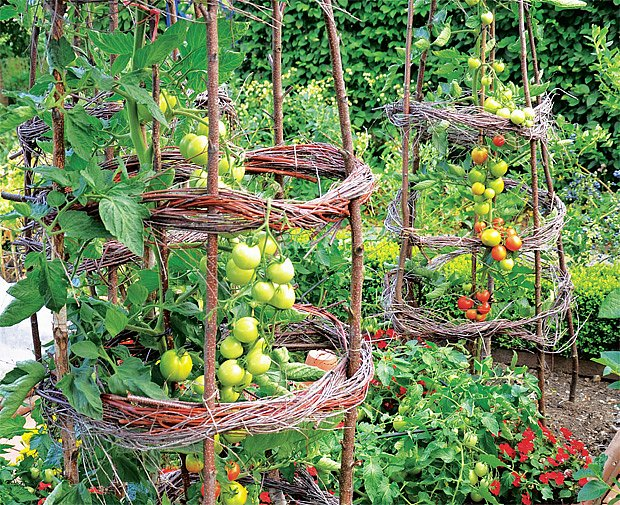podpěra rajčat