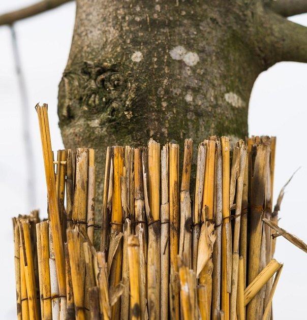Rohož chrání kmen před střídáním teplot a tudíž kůru před praskáním