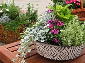 Již hotová miska sesazená z několika rostlin.