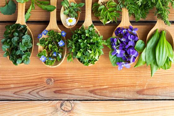 V přírodě můžeme na jaře najít řadu rostlin, kterými zpestříme svůj jídelníček.