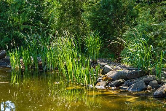 Dešťová zahrada je přírodní a přirozenou zásobárnou vody.