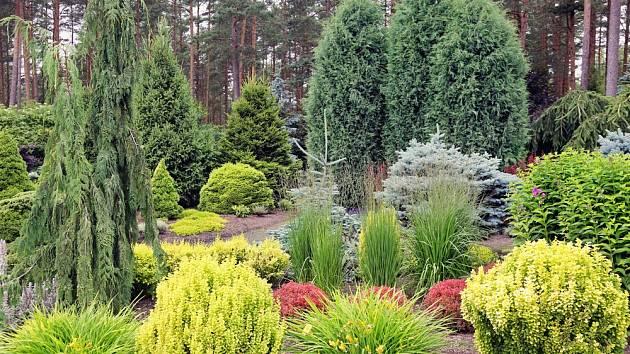 Vhodně vybrané zakrslé dřeviny dokáží oživit zahradu celoročně.