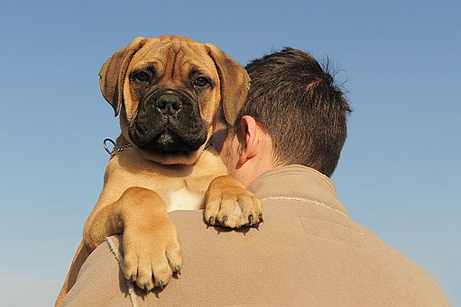 Psi velmi trpí, pokud jsou často ponecháni o samotě.