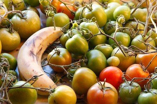 K zeleným rajčatům přidejte zralý banán, uvolňuje etylen, který rajčata ke svému zrání potřebují.