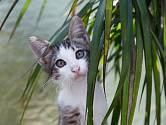 Může dračinec ohrozit vaši kočku?