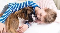 Boxeři jsou hraví, veselí psi velmi vhodní k dětem.