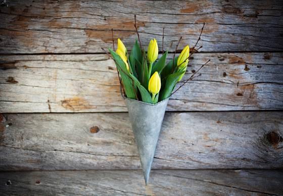 Žluté tulipány s březovými větvičkami.