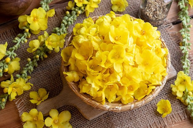 Květy divizny pomohou při řadě obtíží