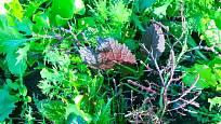 Pestrý smíšený výsev listové zeleniny