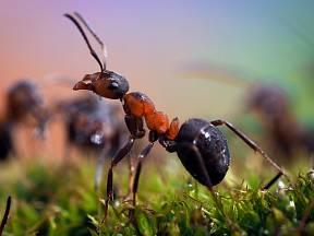 Trápí vás mravenci na zahradě, kteří si dělají pravidelně výlet do vaší kuchyně