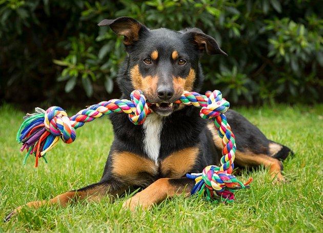 Bavlněné hračky pro psy pomáhají formou hry k dentální hygieně psů.