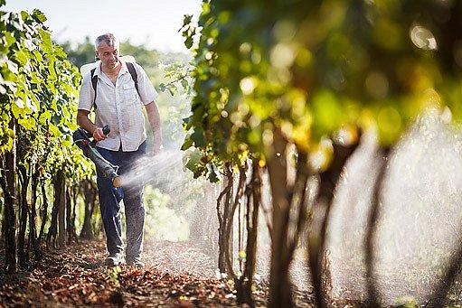 postřik vinice