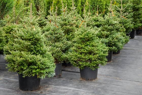 Stromky musí být při prodeji umístěny v chladu