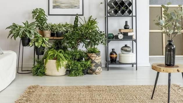 Skupina rostlin v interiéru