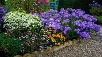 Trvalkové záhony s astrami kvetou až do silnějších mrazů