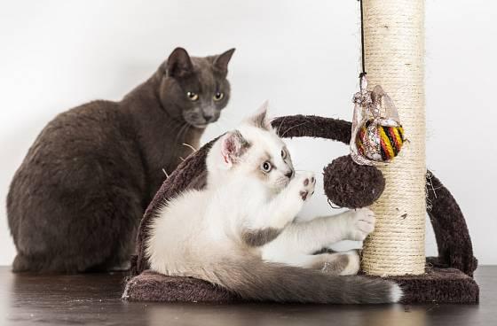 Kočky jsou hravá zvířata.