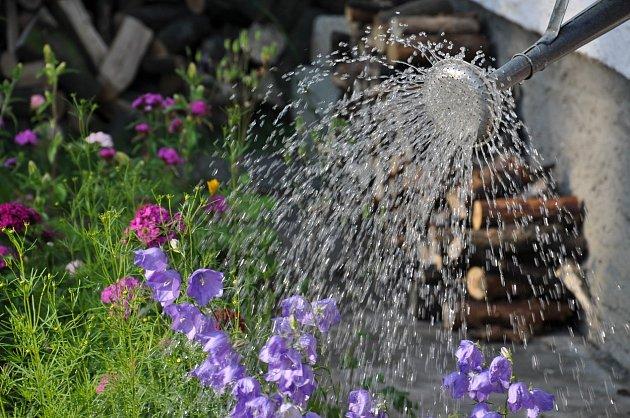 Léto je doba, kdy květiny prahnou po pravidelném přísunu vláhy.