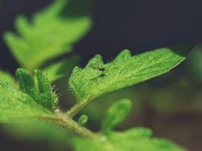 Mšice napadají naši zahradu velmi neomaleně a často
