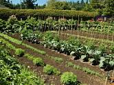Výborný vliv na kvalitu půdy mají např. afrikány.