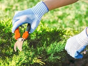 Jak prořezat a prostříhat keře či rostliny na podzim?