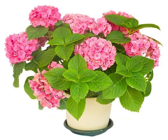 Obal na květináč volíme podle interiéru i barvy květů.
