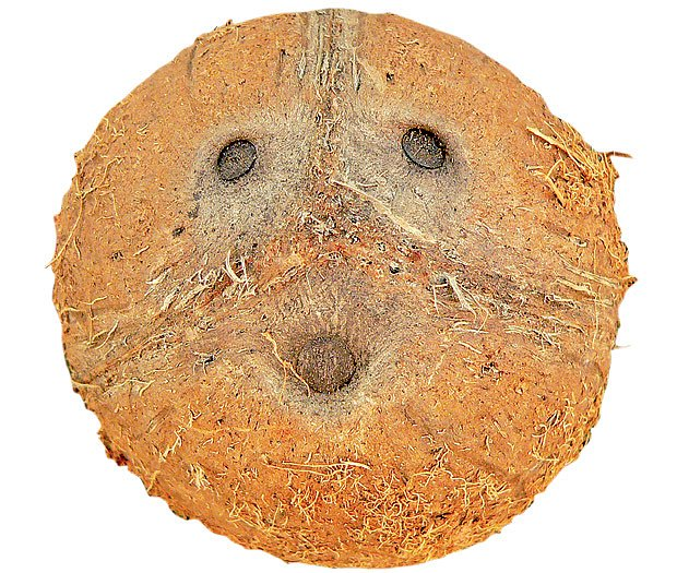 """Španělské a portugalské slovo pro úsměv, úšklebek či grimasu je totiž """"coco""""."""