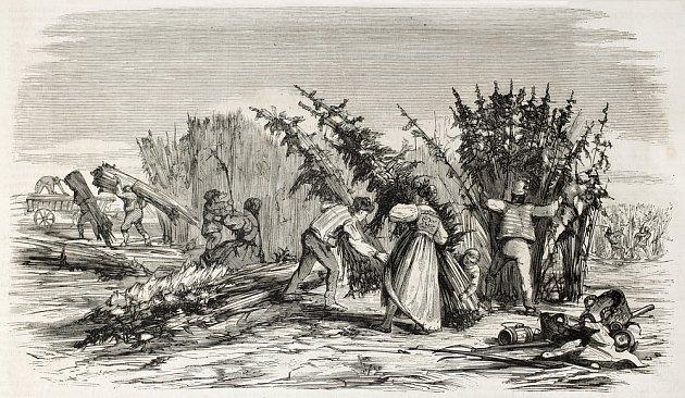 sklizeň konopí na Břehu Rhony, jak ji zachytil Lallemand v  Journal Universel