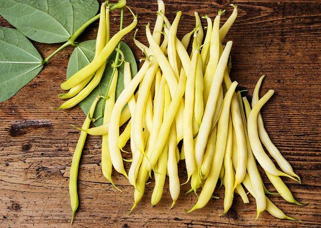 Žluté fazole jsou často označovány jako voskové a mají stejně jako jiné fazole odrůdu pnoucí a keříčkovou.
