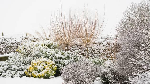 V zimě v zahradě zvlášť dobře vyniknou tvary dřevin.