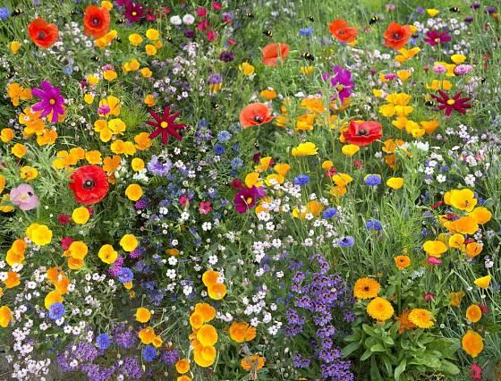 Kromě trvalek zahradu obohatí i pestré směsi letniček